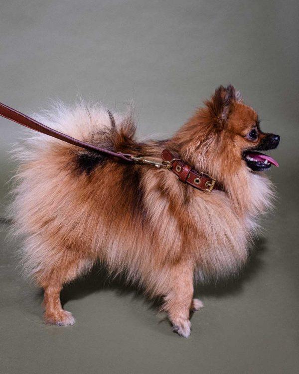 hundehalsband leder spitz