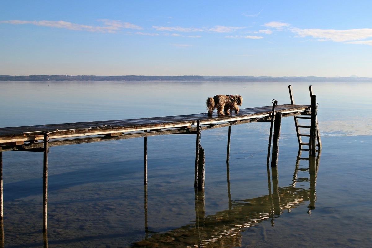 Urlaub mit Hund am See Hund auf einem Steg im Chiemsee