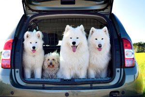 Hunde im Kofferraum