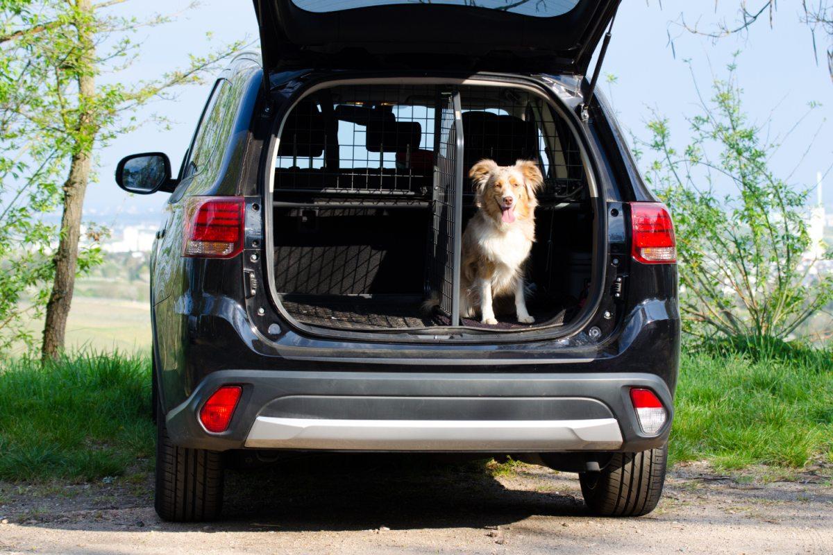 Hund im Kofferraum mit Trenngitter