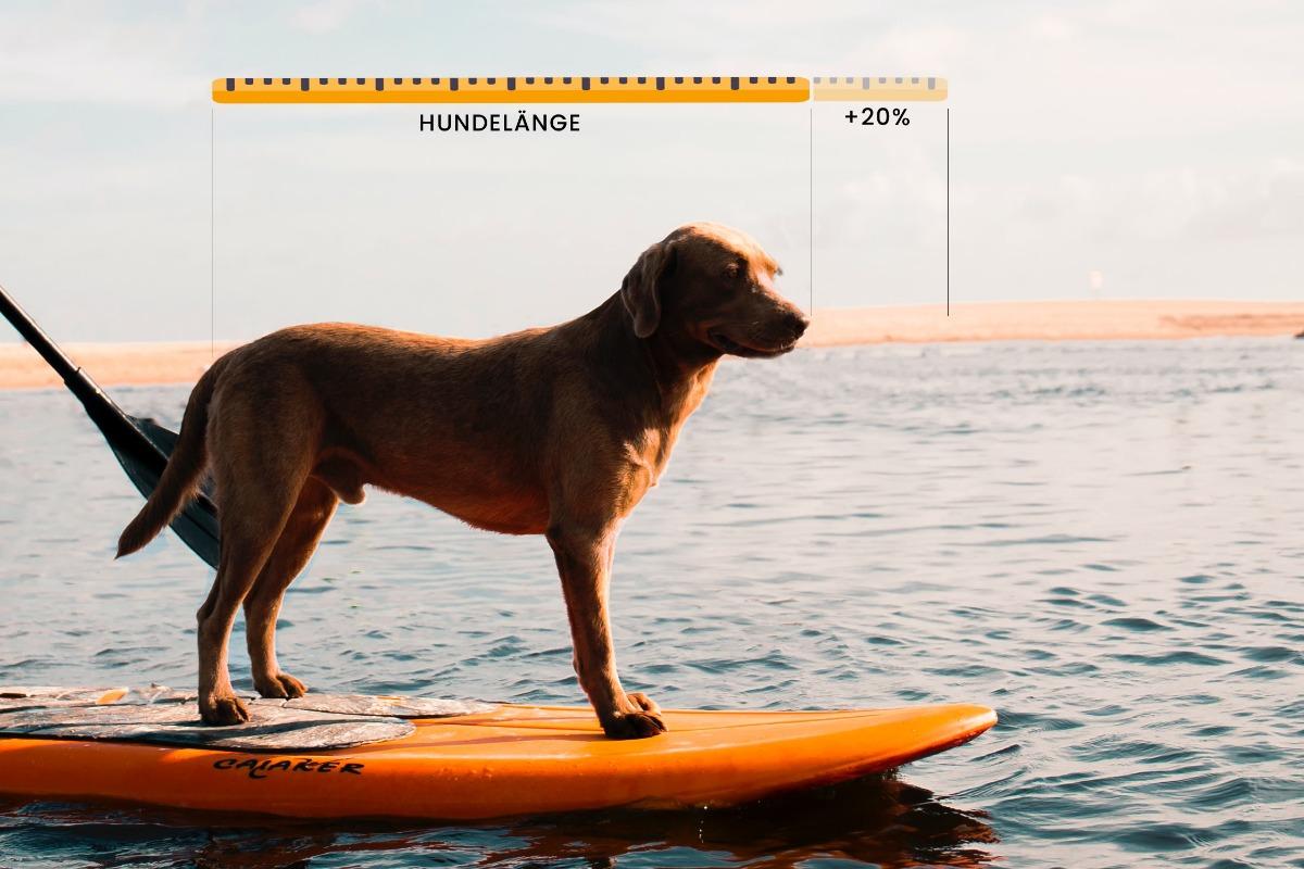 Hund auf Surfboard mit Maße für Hundekörbchen