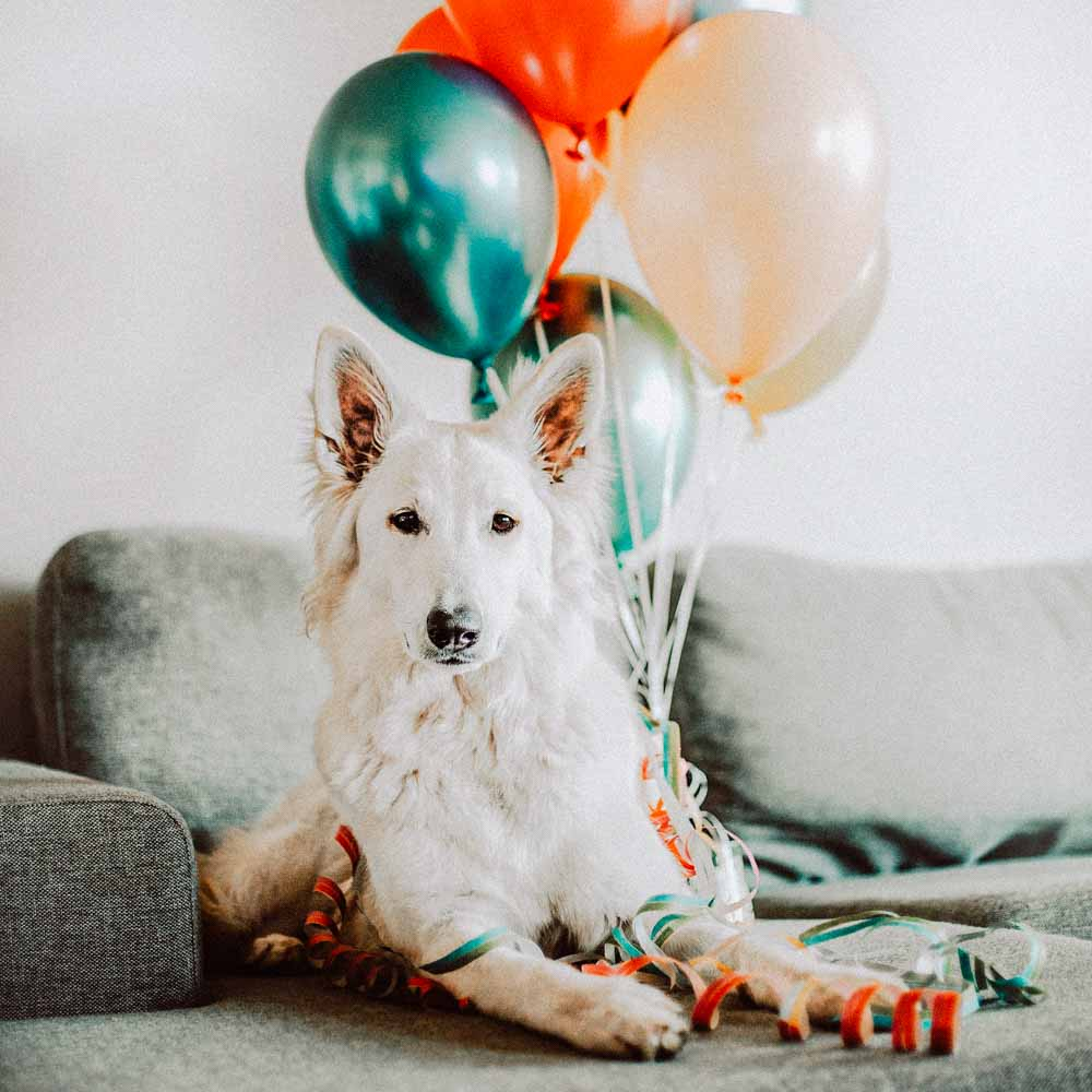 Hund am Geburtstag