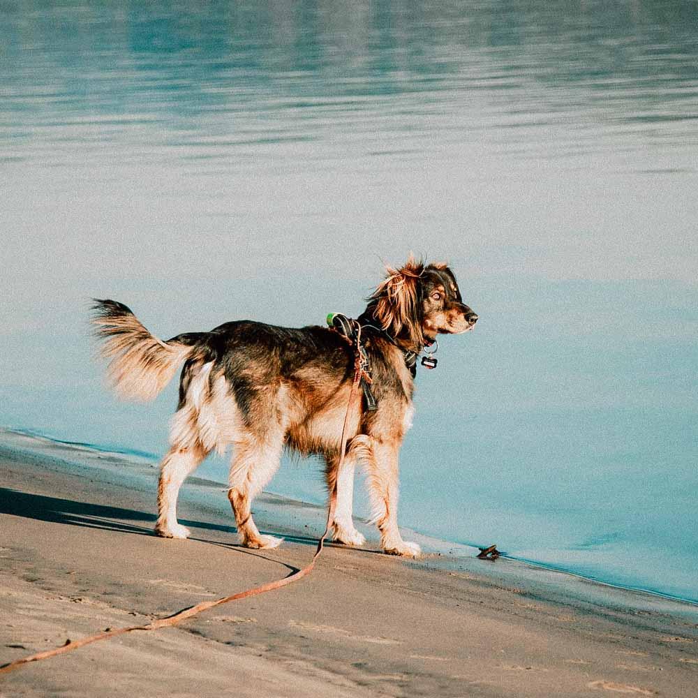 Ausflug mit dem Hund