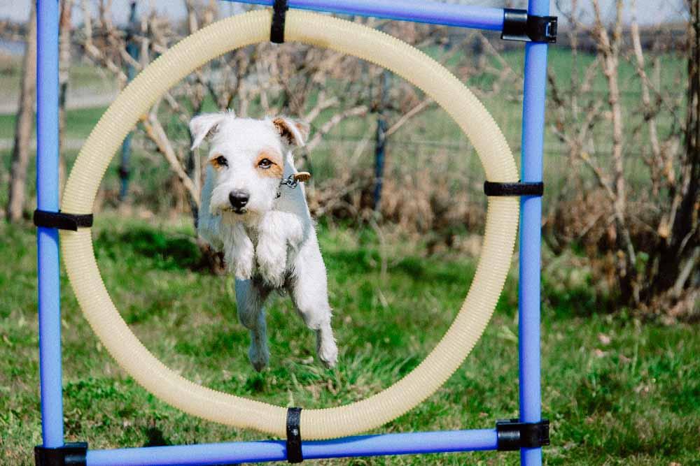 Hund im Parkour