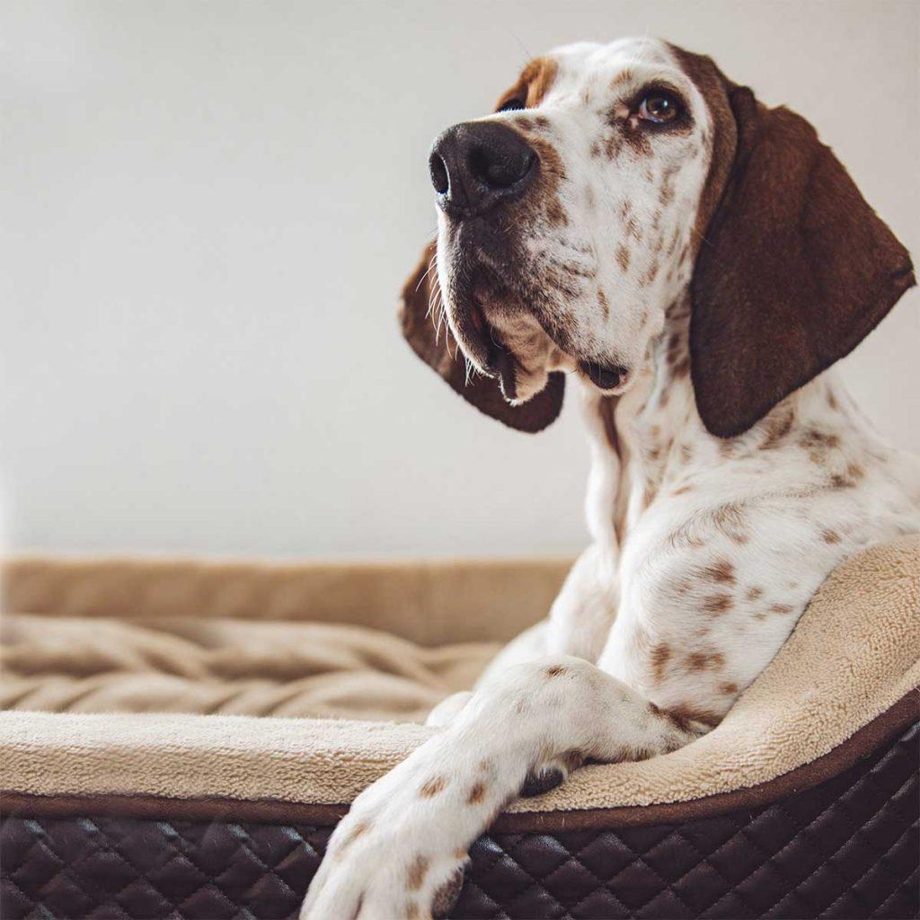 Hund in Hundekörbchen aus Kunstleder
