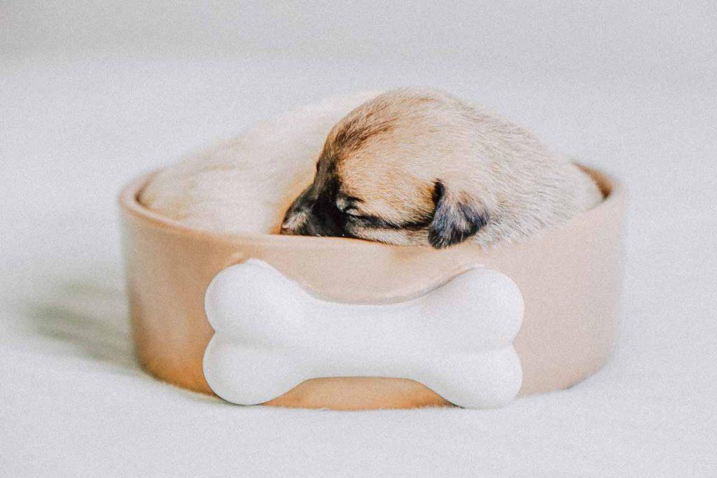 Hundenapf Keramik mit Knochen