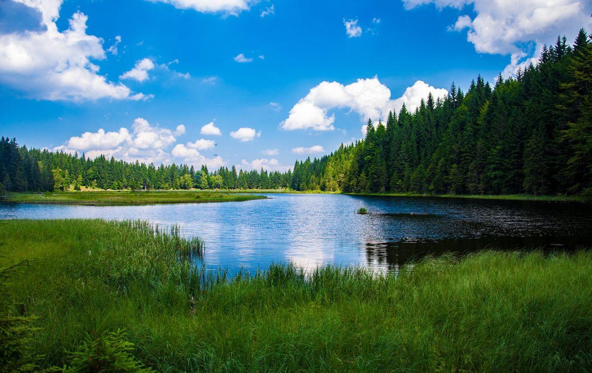 See im Bayerischen Wald