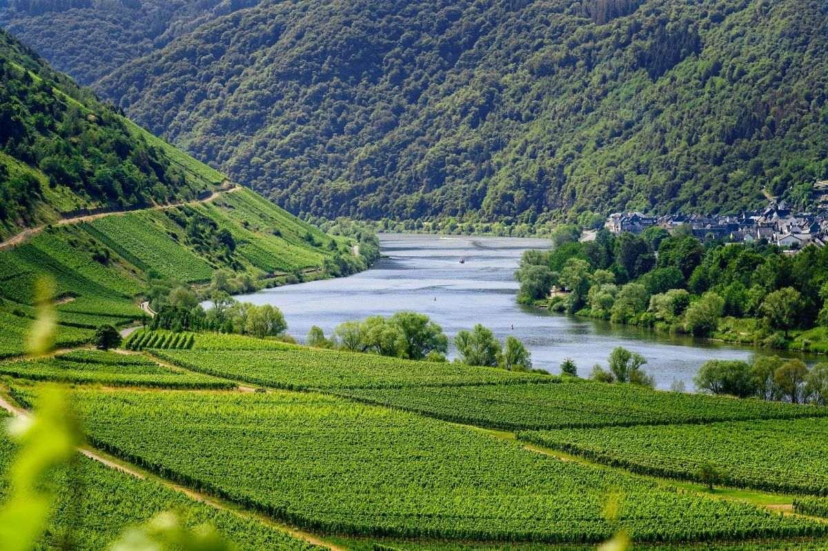 Mosel Fluss und grüne Wiese