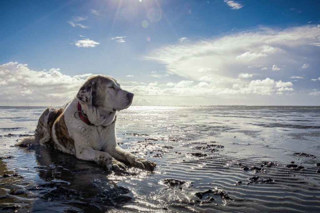 Hund liegt an der Nordsee