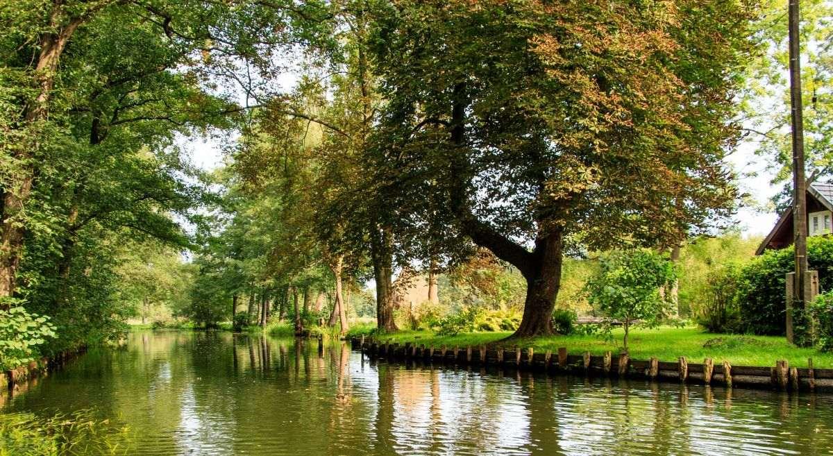 Großer Baum im Spreewald