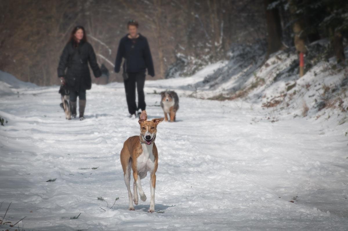 Single mit Hund - Paar im Schnee