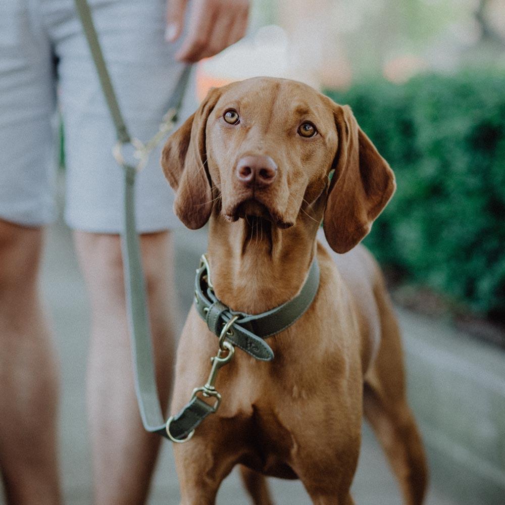 Hund mit nachhaltigem Hundezubehör
