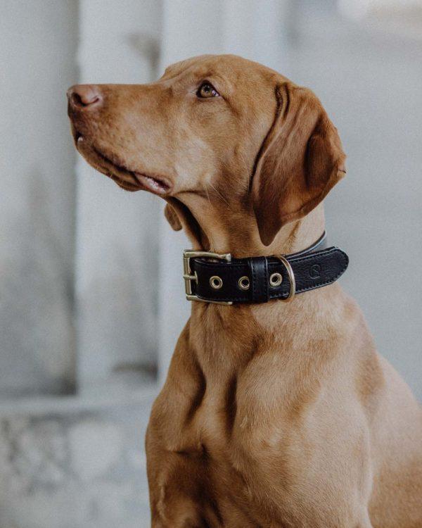Hundehalsband Leder schwarz_Close Up