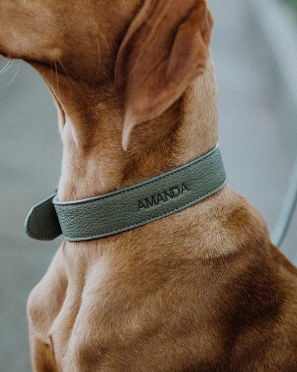 Personalisiertes Hundehalsband grün