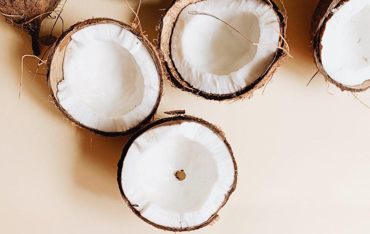 Kokosnuss Hund