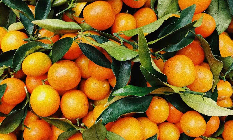 Mandarinen für Hunde